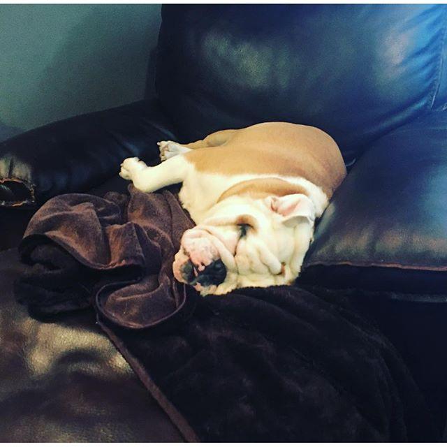 It's my couch! #bubba #bully #bulldog #stinky #sleepytime