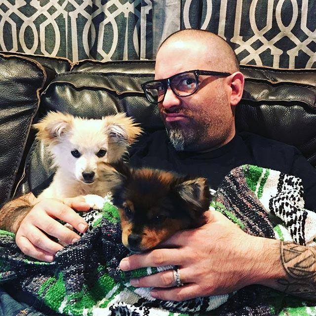 StankEye welcomes home some new little buddies. #chihuahua #pomeranian